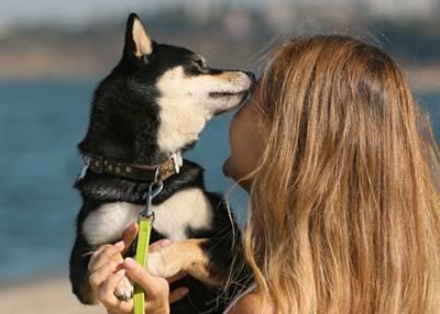 舐め犬募集に最適なサイトは何処